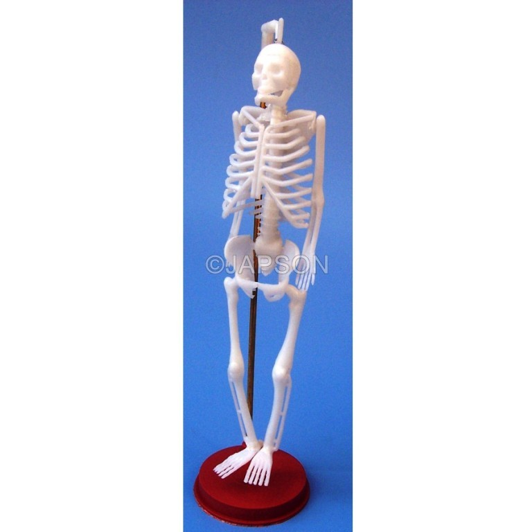 Human Skeleton Model, Small, Plastic