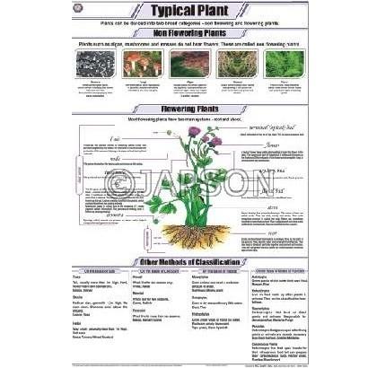 Plant Charts, Botany, School Education
