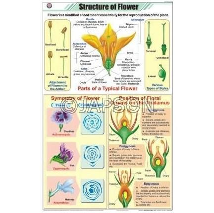 Flower Charts, Botany, School Education