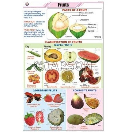 Fruits Charts, Botany, School Education