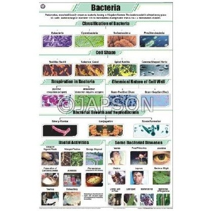 Bacteria Chart, Botany, School Education