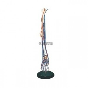 Human Arm Bone Model With Blood Vessels