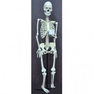Human Skeleton Model, Economy