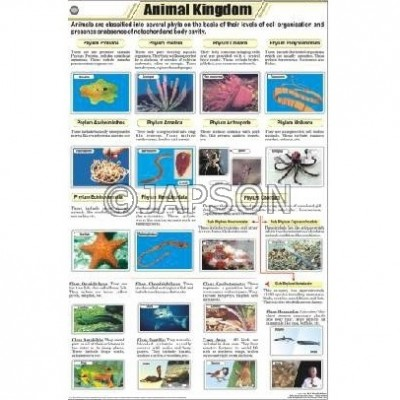 Animal Charts, Zoology, School Education