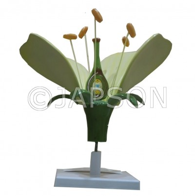 Model, Flower on Stand