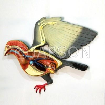 Pigeon Model, Big