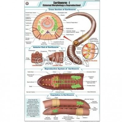 Worm Charts, Zoology, School Education