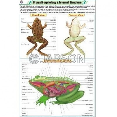 Frog Charts, Zoology, School Education