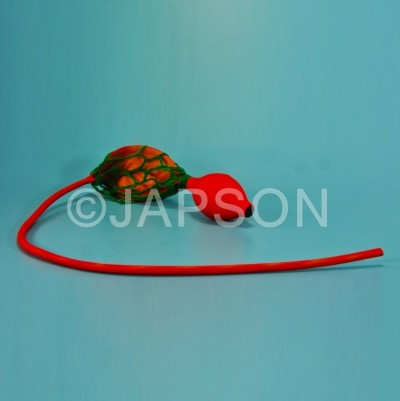 Chloroform Bellow with Cotton Automizer Bulb