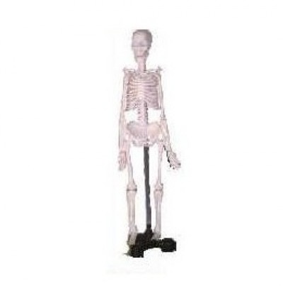 Human Skeleton Model, Mini
