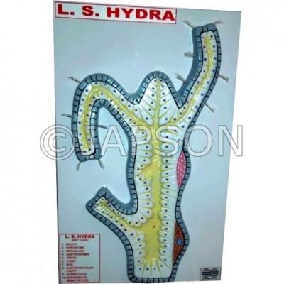 L.S. Hydra Model