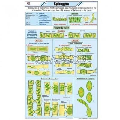 Algae Chart, Botany, School Education