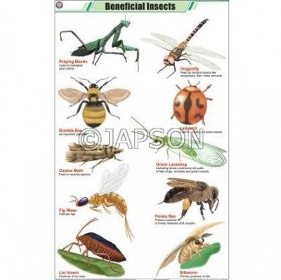 Insects Charts, Zoology, School Education