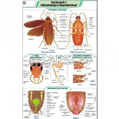 Cockroach Charts, Zoology, School Education
