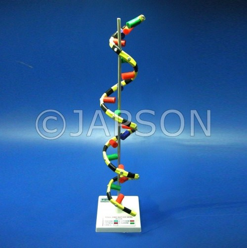 Model, RNA, on Stand