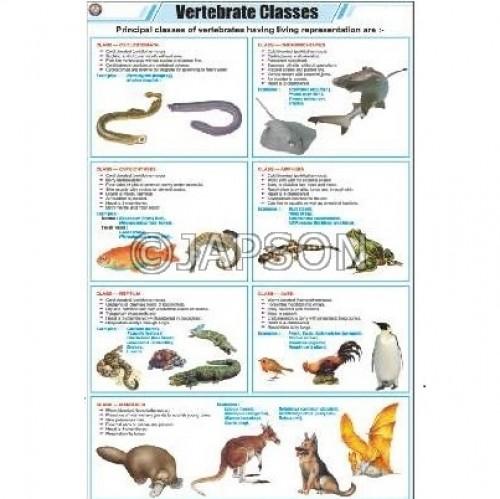 Vertebrate Classes Chart, Zoology, School Education