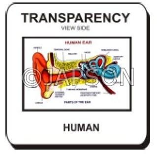 OHP/Overhead Projector - Transparencies/Slide